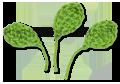 hojas-de-crochet